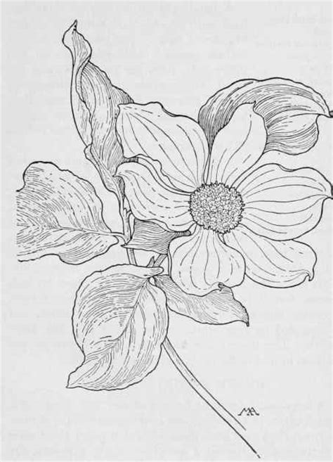 coloring pages of dogwood flowers free dogwood tree coloring pages
