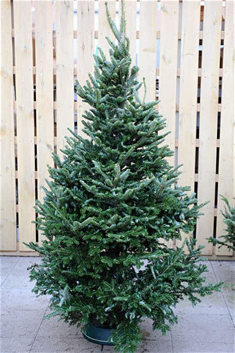 krismas tree to botni name trees rhs gardening