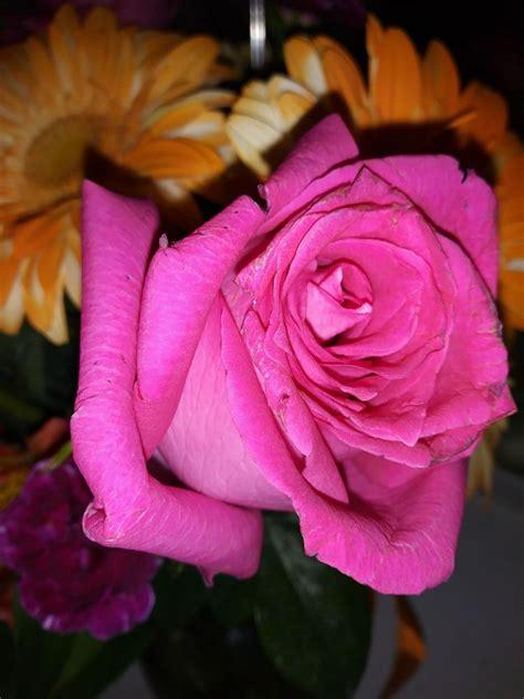 1-800 Flowers Com - 45 Photos & 195 Reviews - Florists ... 1 800 Flowers Review Yelp