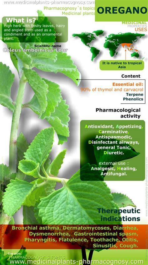 benefits of houseplants medicinal plants sore throat and health on pinterest
