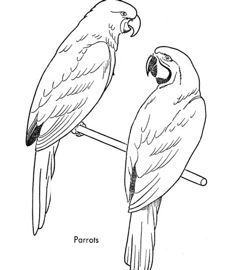 free print of coloring pages of birds free printable parrot coloring pages for kids