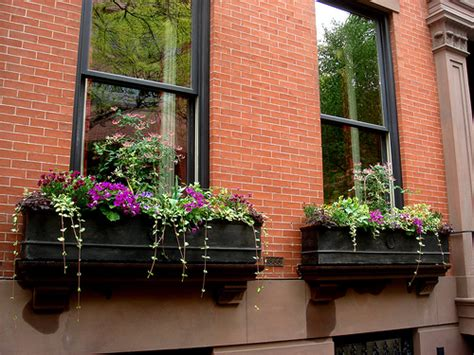 pictures of window boxes althouse are there better window boxes anywhere than in