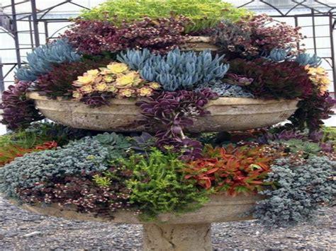 outdoor garden ideas succulents garden ideas pots for succulent gardens