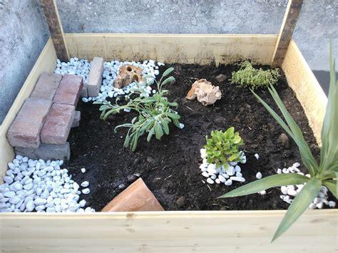 terrario per tartarughe di terra giardino come costruire un terrario per tartarughe di terra in