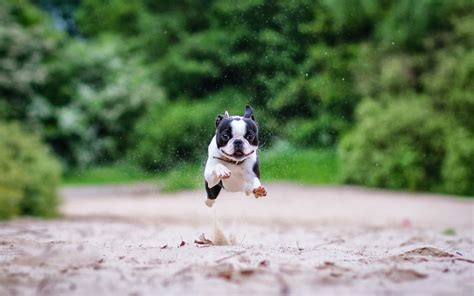 running puppy hd dogs wallpapers and photos hd animals wallpapers