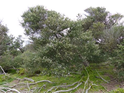 coastal dune flora part 1 shrubs and trees wild south east