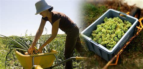 Mesin Pencacah Rumput Termurah daftar harga alat pertanian toko mesin maksindo daftar