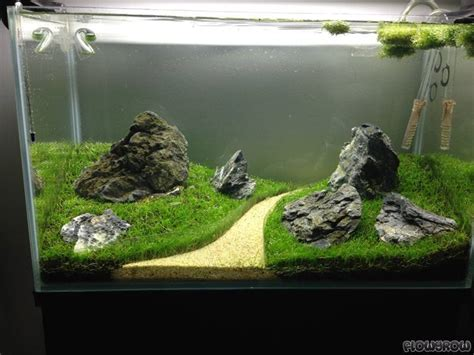 Iwagumi Aquascape by Guppy Types Rainbowfish Millionfish Aquascaping