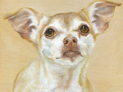 maggie the inner musings of a chihuahua a memoir books explore the whimsical of maggie hurley maggie hurley