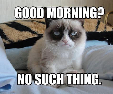 Best Grumpy Cat Memes - catnip donations accepted page 6 wasteland