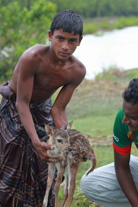 of saving baby deer boy risks to save baby deer from drowning grindtv