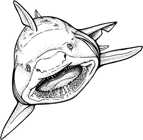 cool coloring pages of sharks free shark coloring pages