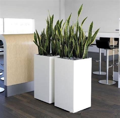 plants broadway plantscapers pots for indoor plant hire broadway plantscapers