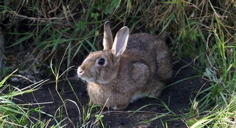 7 Facts On Bunny Rabbits by Interesting Facts About Rabbits The Fact Site