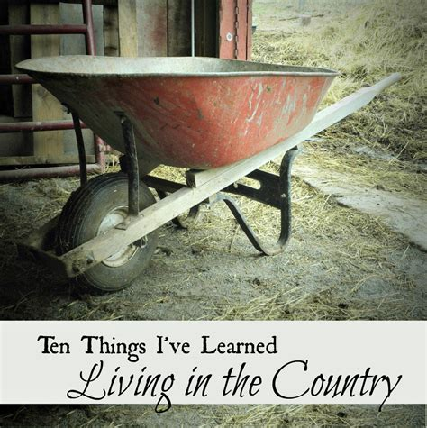 10 Things Ive Learned From Living With Cats by Ten Things I Ve Learned Living In The Country Oak Hill