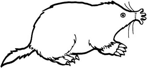 golden mole coloring pages batch coloring