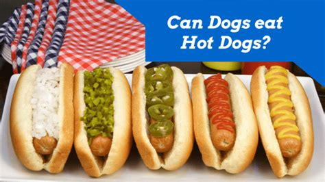 can dogs eat mustard dogs dogs www pixshark images galleries with a bite