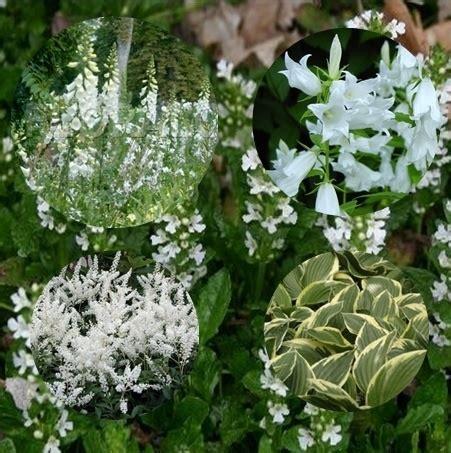 witte border bloemen uitzonderlijk vaste planten border halfschaduw sl01