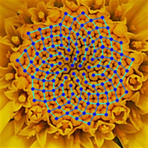 number pattern in nature rij van fibonacci wikipedia
