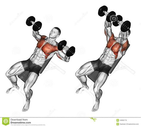 incline bench muscles exercising dumbbell bench press while lying on an stock