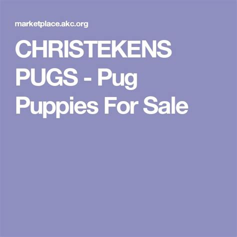 pug puppies for sale northern california 17 best ideas about pug puppies for sale on names for puppies pugs