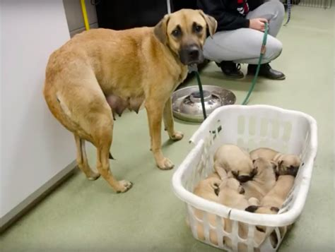 shelter st louis rescuers to save puppies from freezing temperatures familypet
