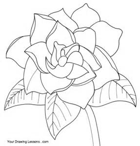 Gardenia Flower Drawing How To Draw A Gardenia Your Drawing Lessons