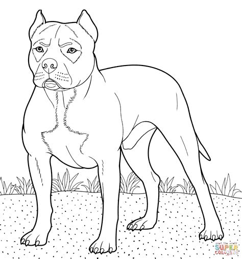 Pit Bull Coloring Pages pitbull coloring page free printable coloring pages