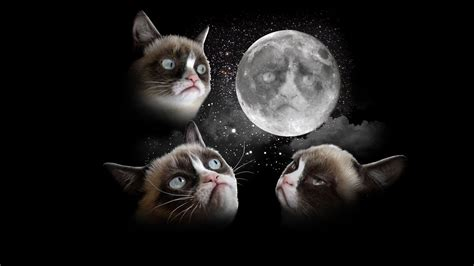 grumpy cat wallpaper iphone grumpy wallpapers wallpaper cave