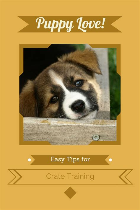 crate puppy while at work tips for easy puppy crate dogvills