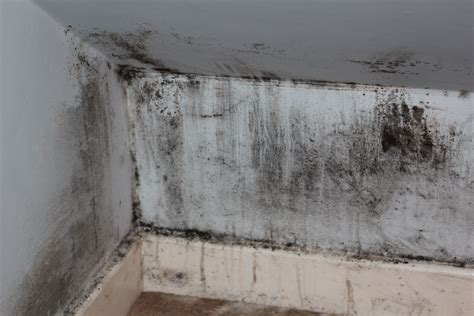 house mold free stock photo of house mould