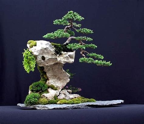 here s a thought bonsai brilliantbonsai a lifetime s for bonsai and penjing landscapes page 4