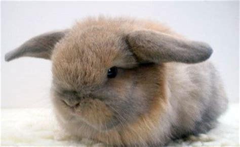 gabbie per coniglietti nani convivenza dei conigli nani i consigli di donnola tizia