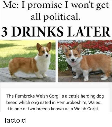 Corgi Puppy Meme - 25 best memes about pembroke welsh corgi pembroke welsh