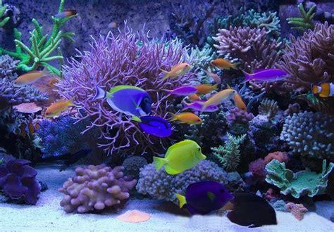 aquarium led len led aquarium led aluminium en rvs profielen uw profiel