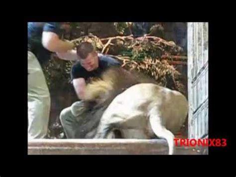 Imagenes Impresionantes De Ataques De Animales | ataques de leones a personas y animales leones atacando a
