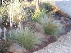 gardening in africa ornamental grasses in the garden