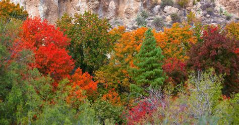in fall where to see arizona s fall colors