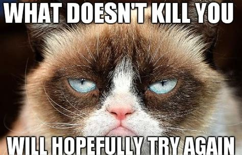 Grumpy Cat Coma Meme - funny angry grumpy cat memes collection for friends family