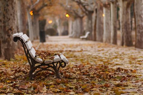 fall bench fall park bench leaves hd wallpapers