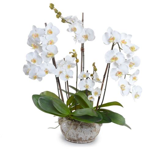 Flower Pot Sale by White Phalaenopsis Orchid Arrangement Traditional