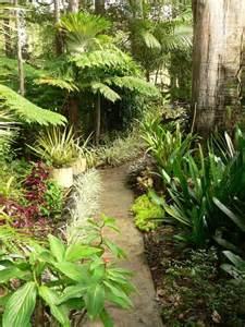 Tropical Planting Scheme - tropical garden opens at mt nathan on 3 and 4 october abc melbourne australian broadcasting