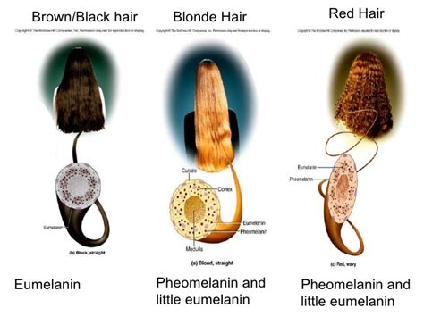 what is hair of the integument