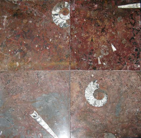 elen hunting importing inc red ammonite and orthoceras fossil marble tiles 12 quot price per tile