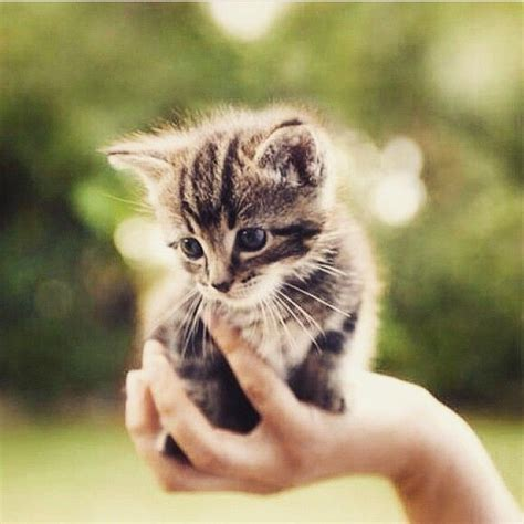baby shark kucing 23011 best images about cute kittens on pinterest white