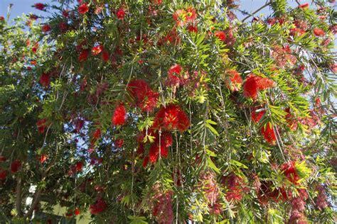 Arbuste Fleuri Feuillage Persistant by Arbuste 224 Feuillage Persistant Liste Ooreka