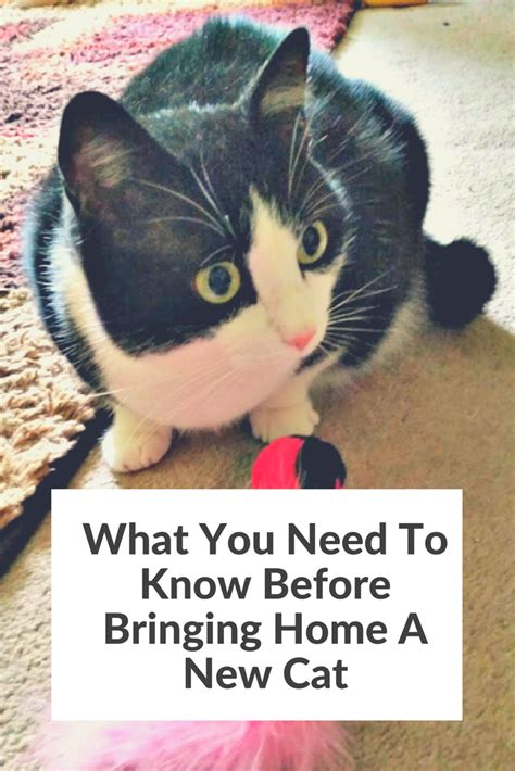 what you need to before bringing house a new cat