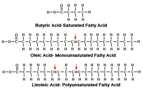 saturated diagram fatty acids attached