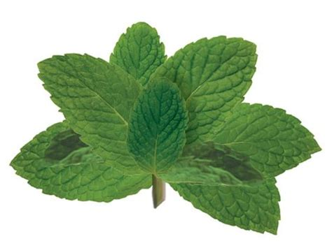 Menta Cool Mint Sugar Free 10g cocktail 101 how to muddle mint and other herbs serious