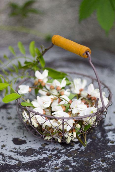 frittelle con fiori di acacia frittelle con fiori di acacia in cucina con me